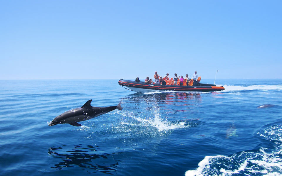 dolphin watching caves tour albufeira